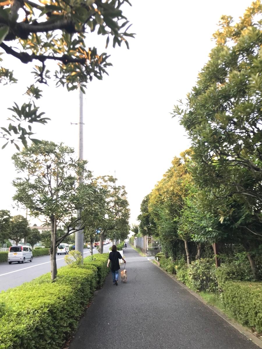 f:id:tetsujin64go:20190808060132j:plain