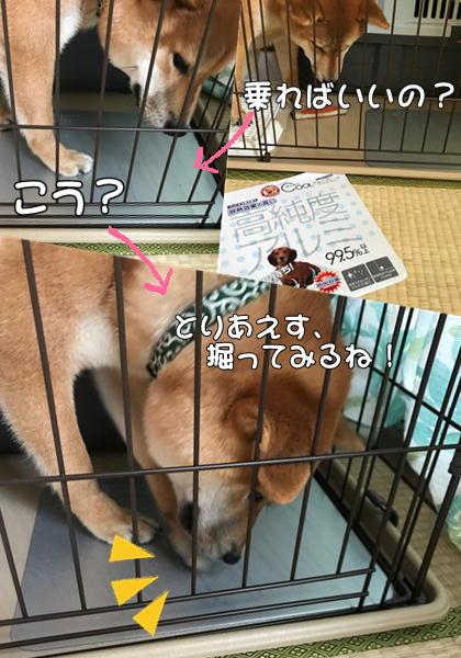 f:id:tetsujin64go:20190809212356j:plain