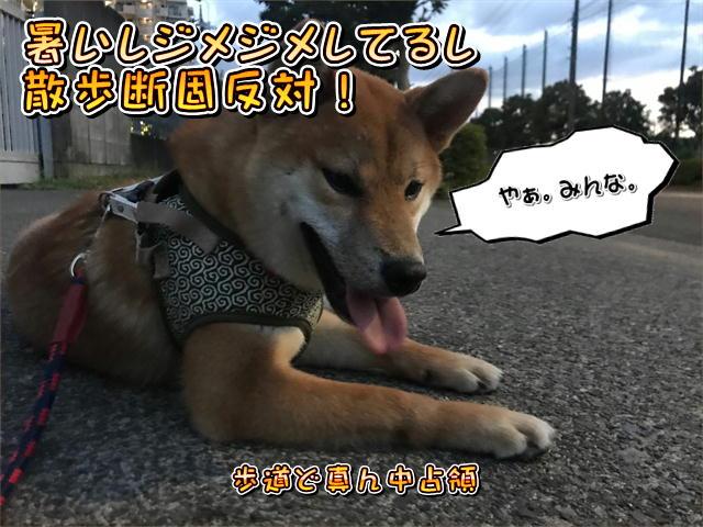 f:id:tetsujin64go:20190811192235j:plain