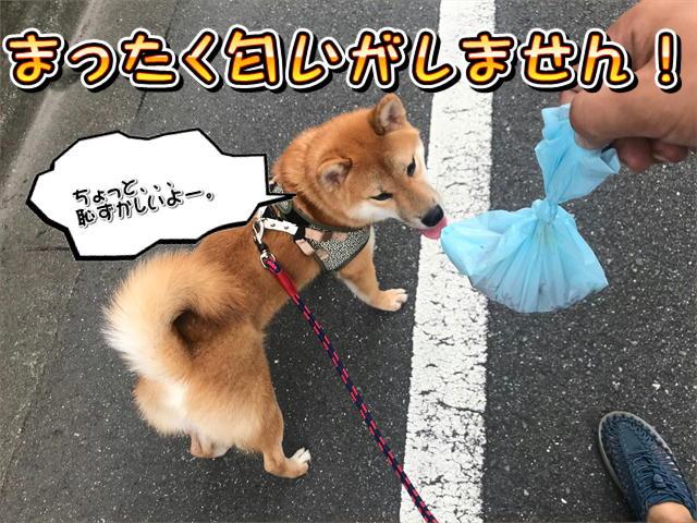 f:id:tetsujin64go:20190812104941j:plain