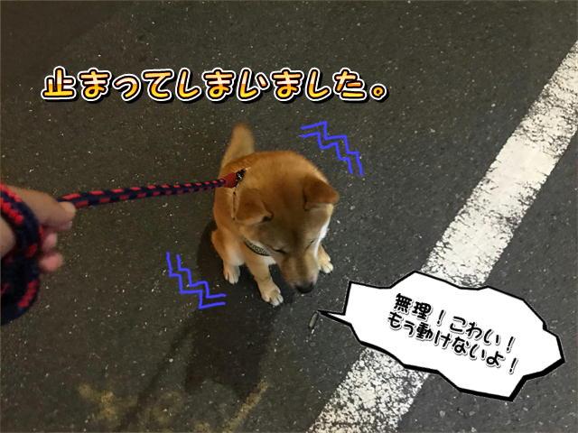 f:id:tetsujin64go:20190816085120j:plain