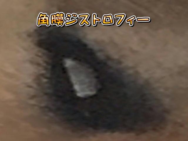 f:id:tetsujin64go:20190818070143j:plain
