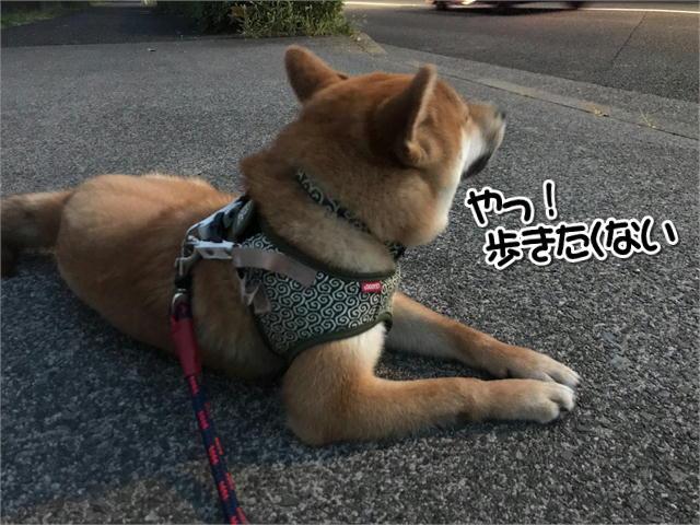 f:id:tetsujin64go:20190828125311j:plain