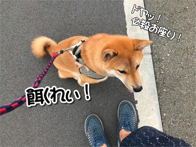 f:id:tetsujin64go:20190828131706j:plain