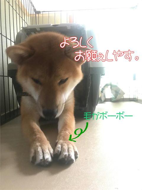 f:id:tetsujin64go:20190830220743j:plain