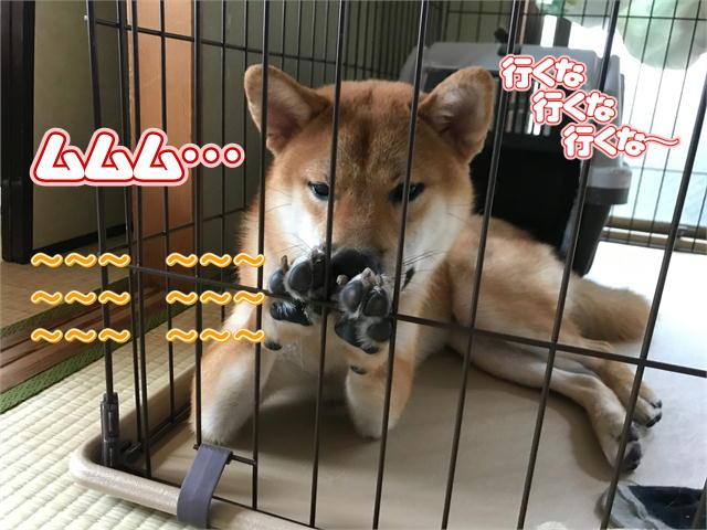 f:id:tetsujin64go:20190917145431j:plain