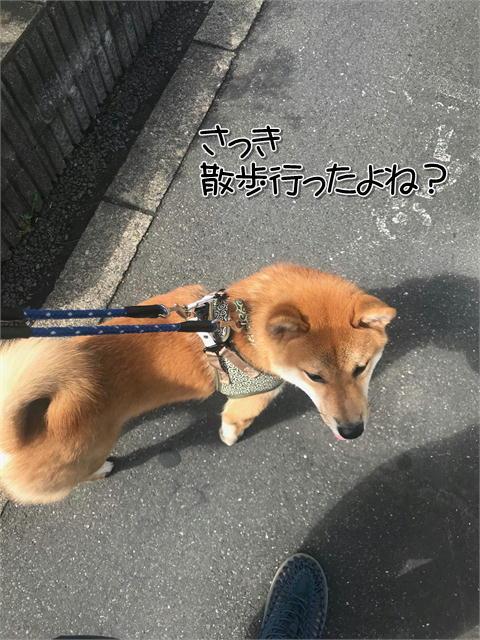 f:id:tetsujin64go:20190919113958j:plain