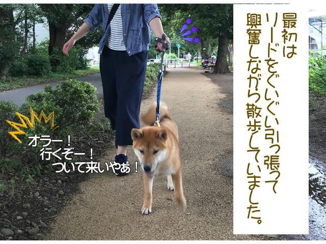 f:id:tetsujin64go:20190921221843j:plain