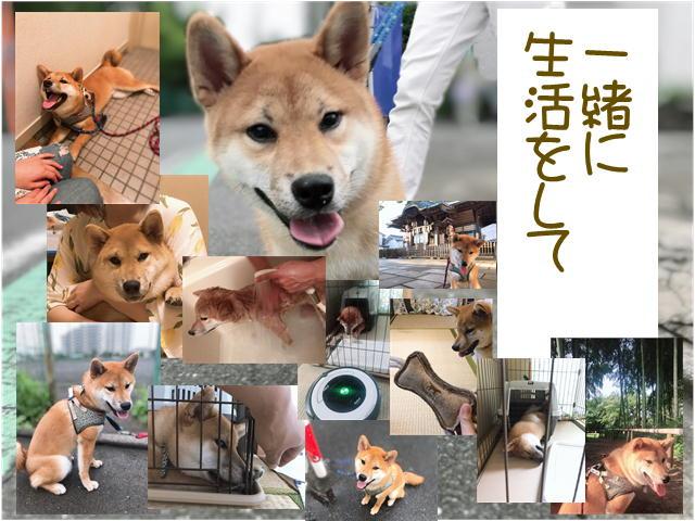 f:id:tetsujin64go:20190921221905j:plain