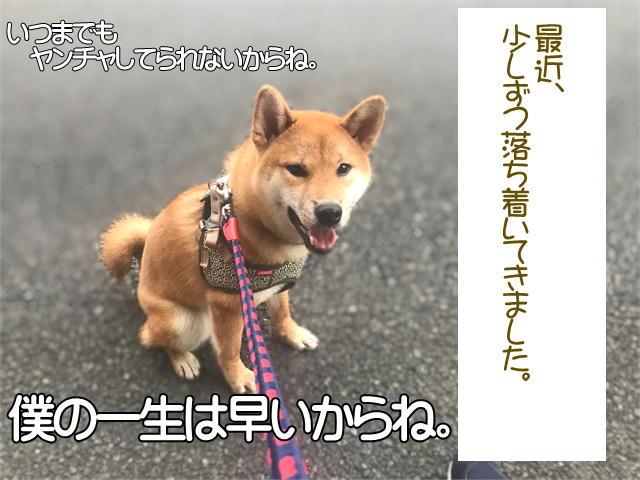 f:id:tetsujin64go:20190921222228j:plain