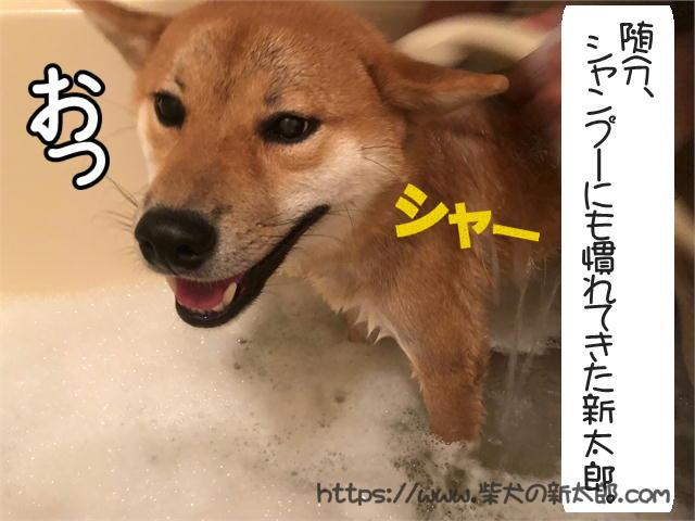 f:id:tetsujin64go:20190926102040j:plain