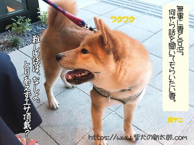 f:id:tetsujin64go:20191008103023j:plain