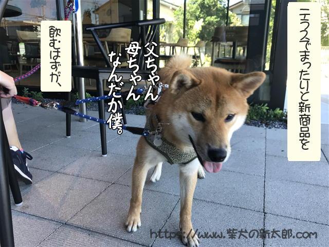 f:id:tetsujin64go:20191013120815j:plain