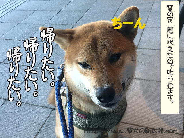 f:id:tetsujin64go:20191013120852j:plain