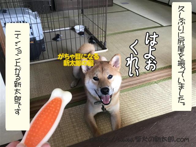 f:id:tetsujin64go:20191027192446j:plain