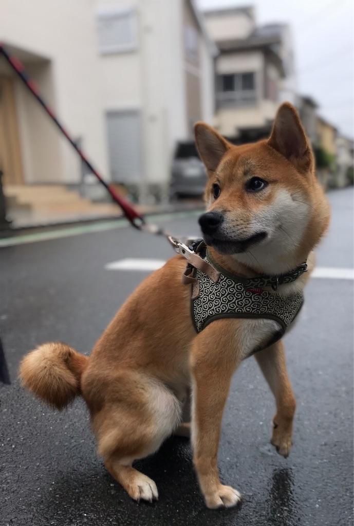 f:id:tetsujin64go:20191202200818j:image