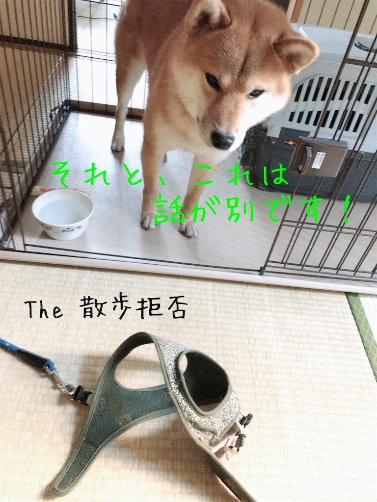 f:id:tetsujin64go:20191227093902j:image
