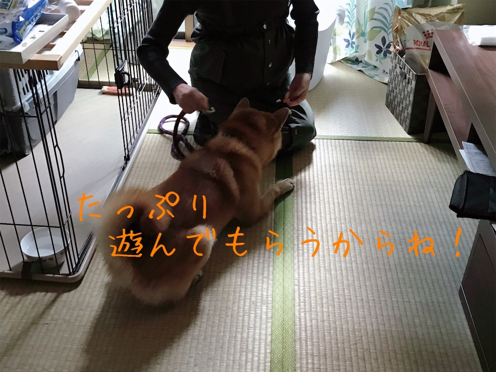 f:id:tetsujin64go:20200104152501j:image