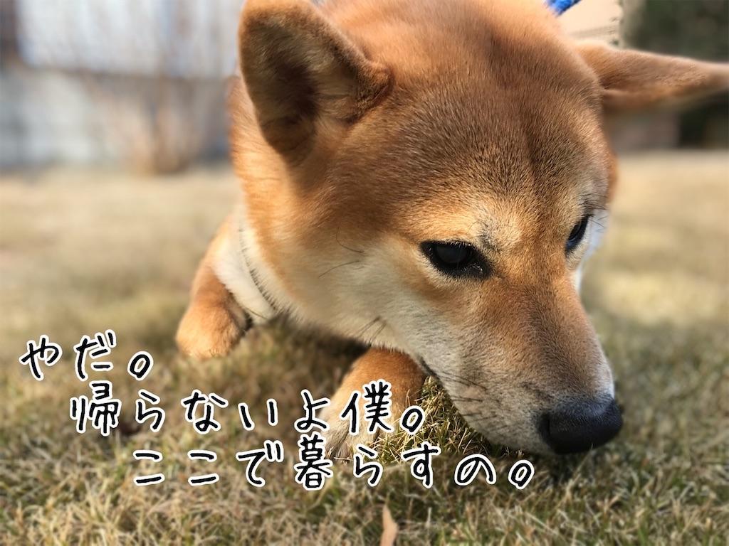 f:id:tetsujin64go:20200111201005j:image