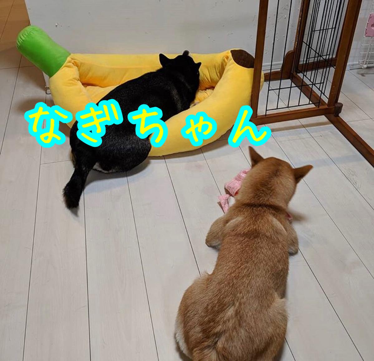 f:id:tetsujin64go:20200117221033j:plain