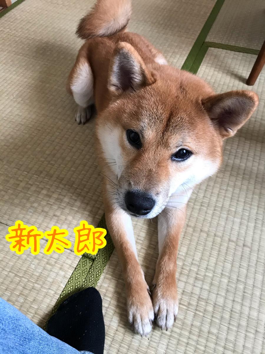 f:id:tetsujin64go:20200117222055j:plain