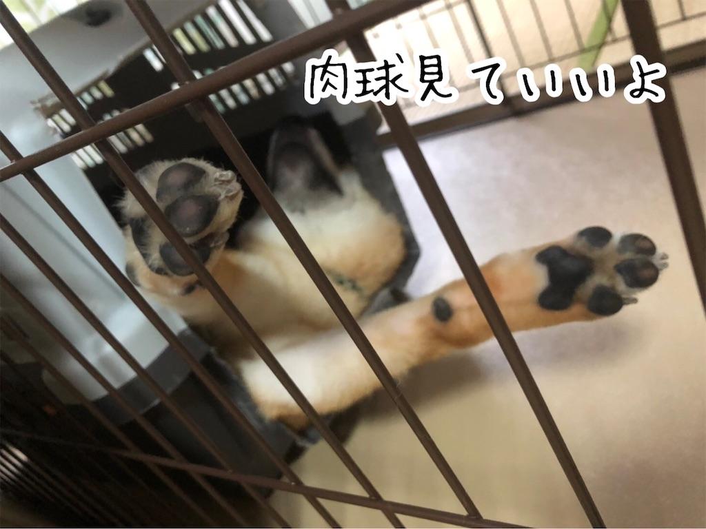 f:id:tetsujin64go:20200123101245j:image