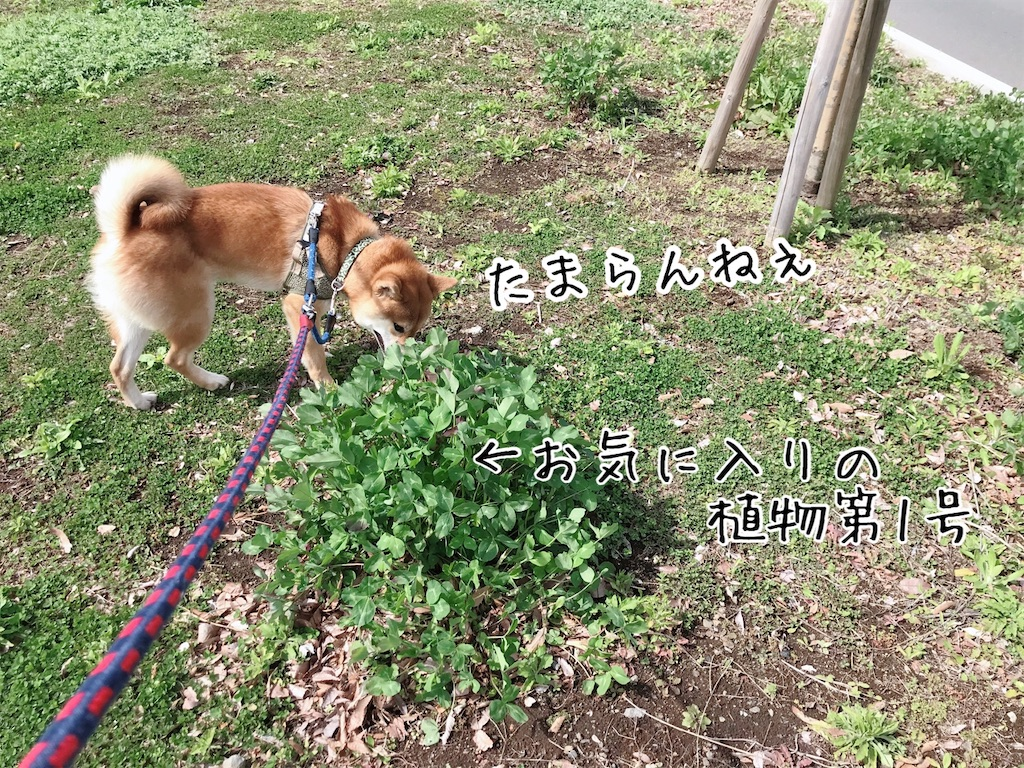 f:id:tetsujin64go:20200315114551j:image