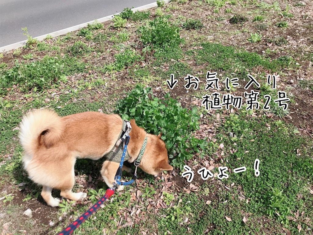 f:id:tetsujin64go:20200315114626j:image