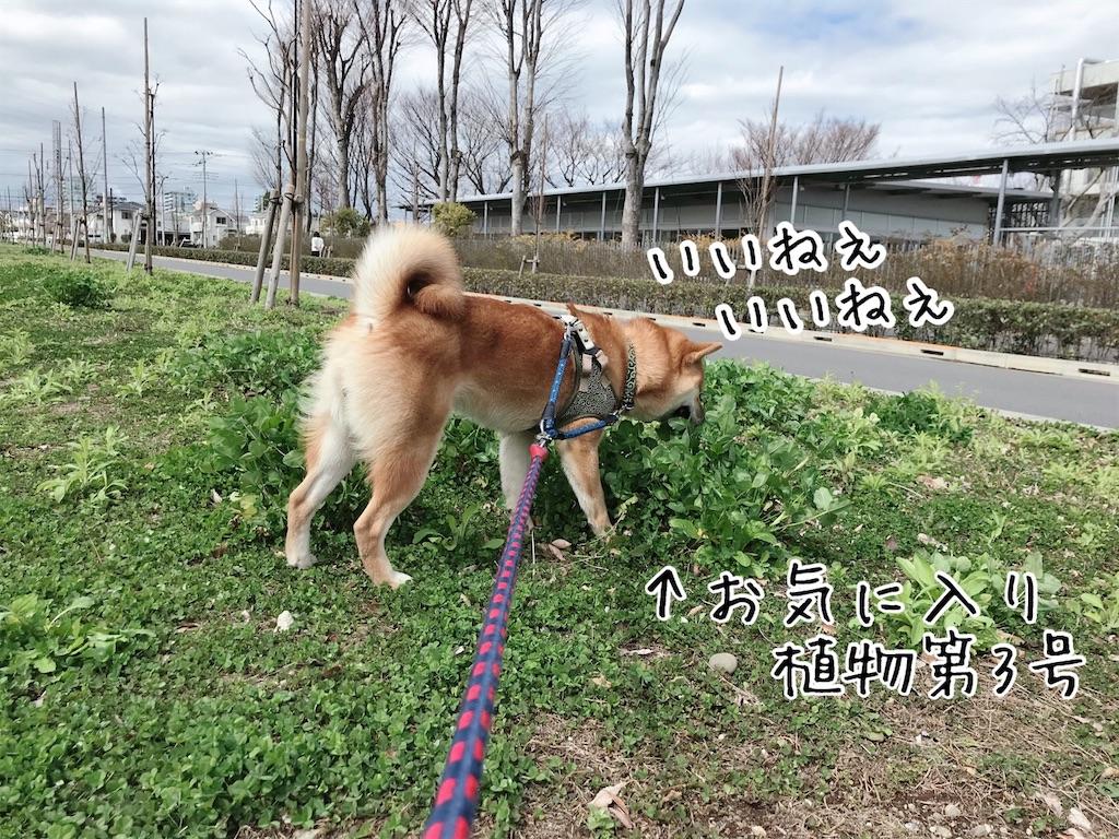 f:id:tetsujin64go:20200315114643j:image