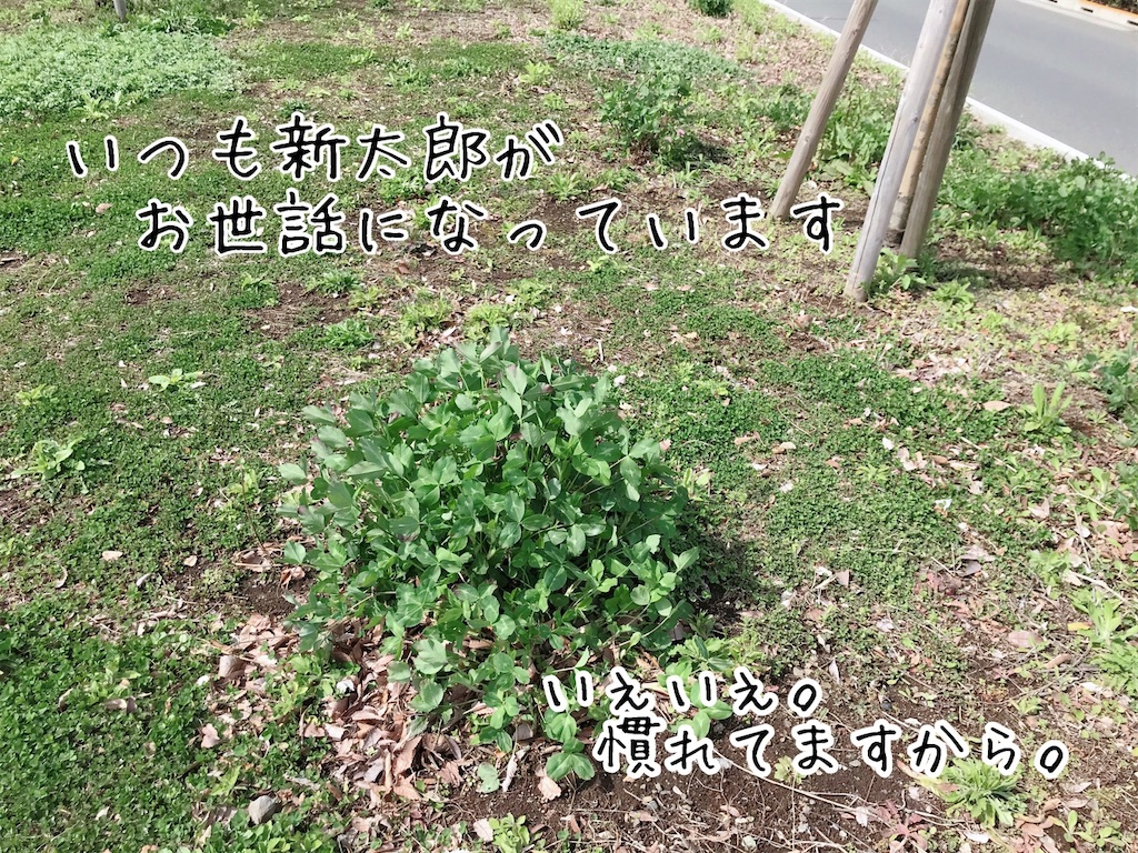 f:id:tetsujin64go:20200315114716j:image
