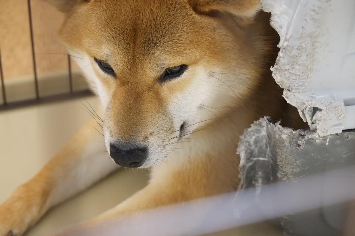 f:id:tetsujin64go:20200418231037j:plain