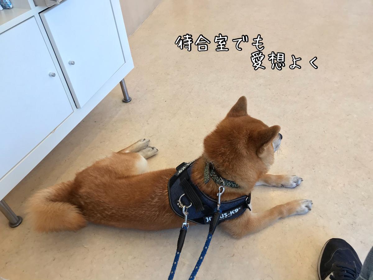 f:id:tetsujin64go:20200514130521j:plain