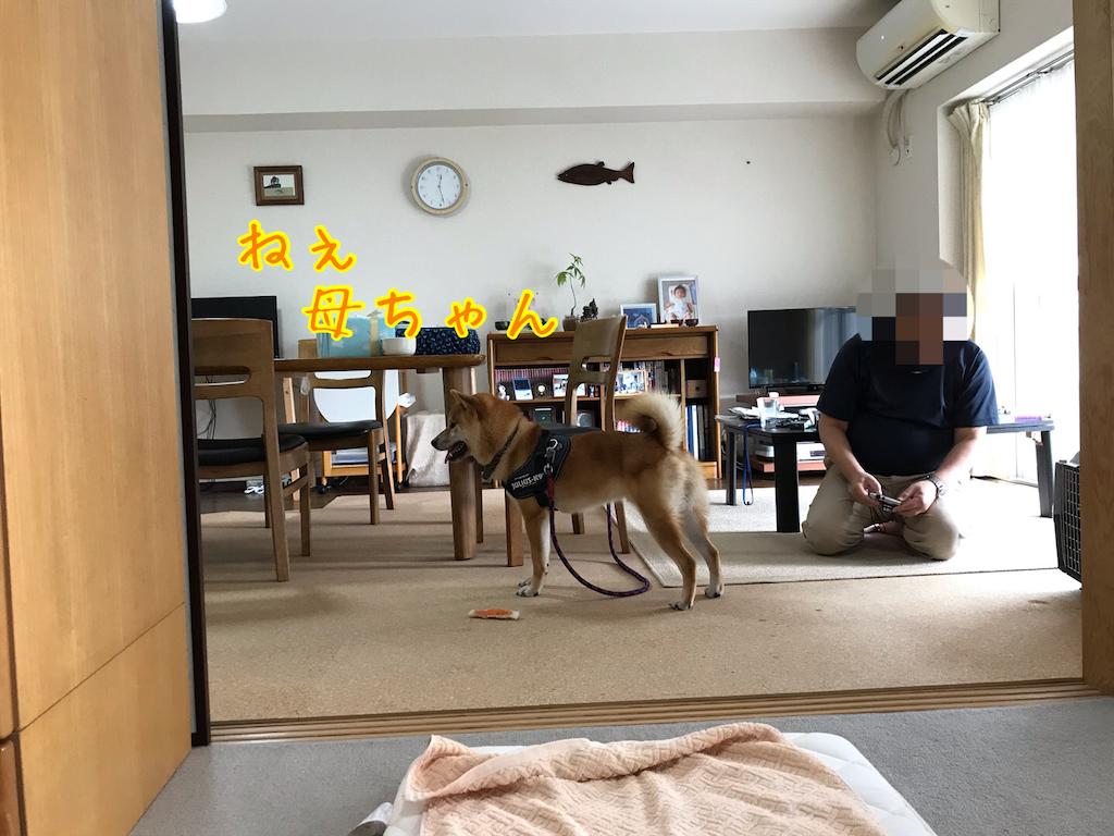 f:id:tetsujin64go:20200718175239p:image