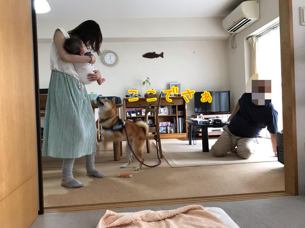 f:id:tetsujin64go:20200718175245p:image