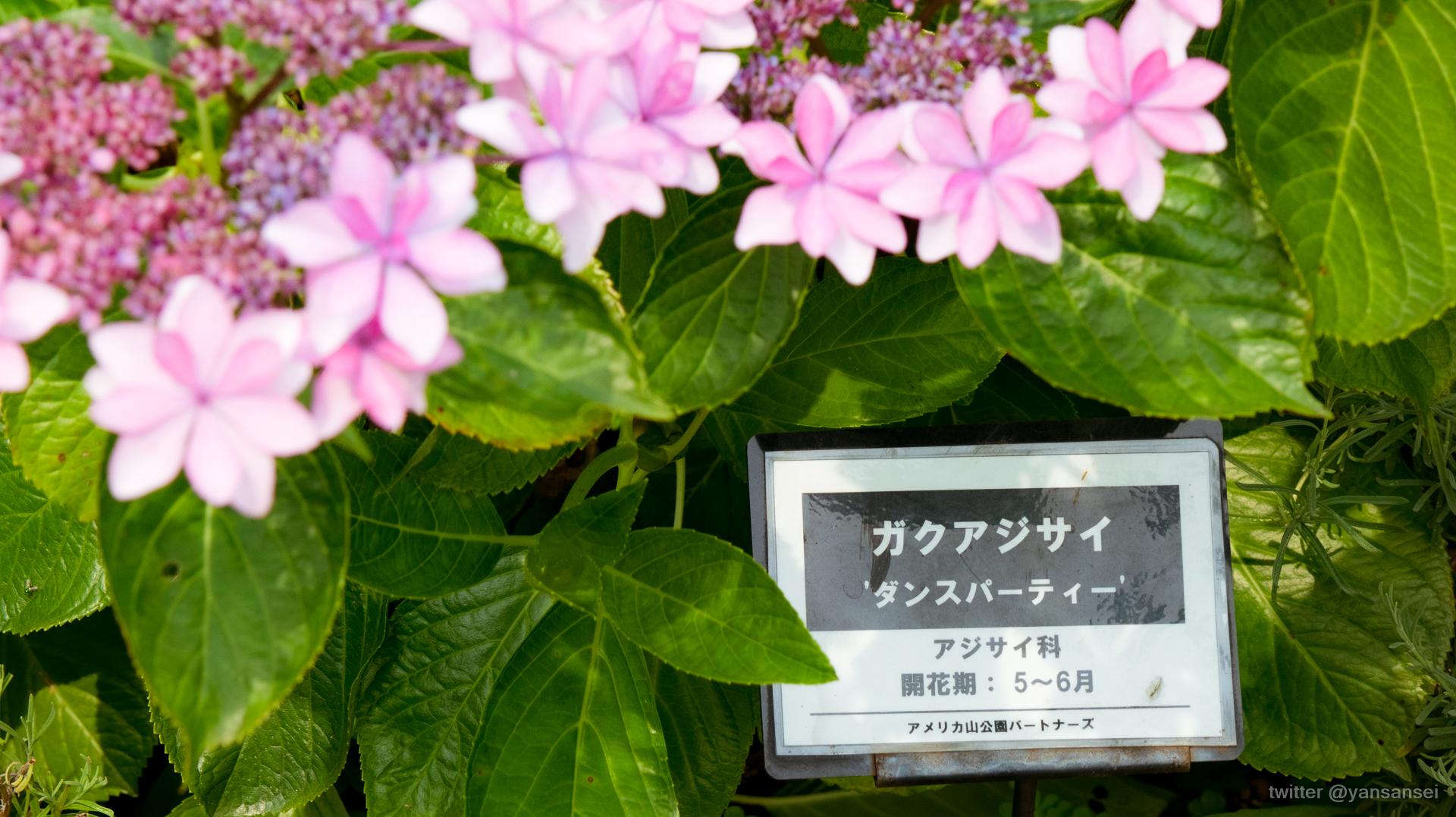 f:id:tetsuya0723:20200606092932j:plain