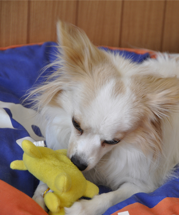 f:id:tetsuyai:20100119220615j:image:w300