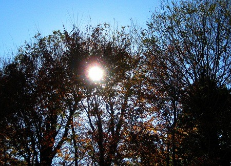 f:id:tetsuyaota:20090220122850j:image