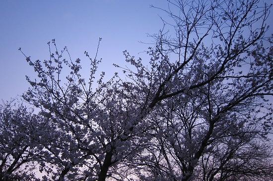 f:id:tetsuyaota:20100329143900j:image