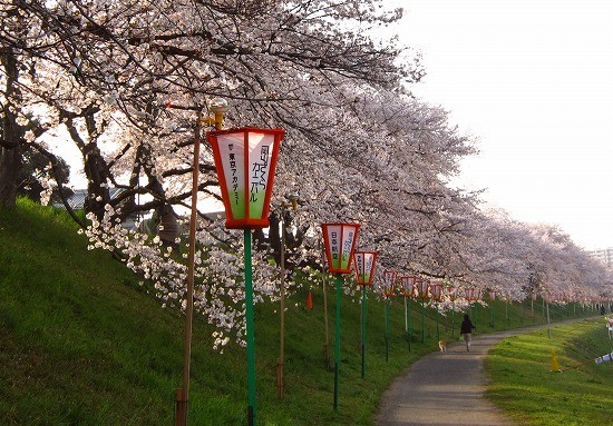f:id:tetsuyaota:20100406185125j:image
