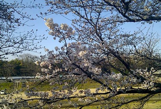f:id:tetsuyaota:20110407195118j:image