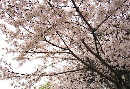 f:id:tetsuyaota:20110414180801j:image