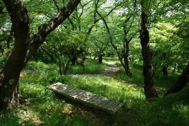 f:id:tetsuyaota:20110506174914j:image