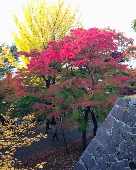 f:id:tetsuyaota:20121110092312p:image