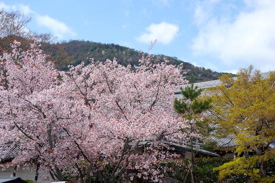f:id:tetsuyaota:20140408153655j:plain