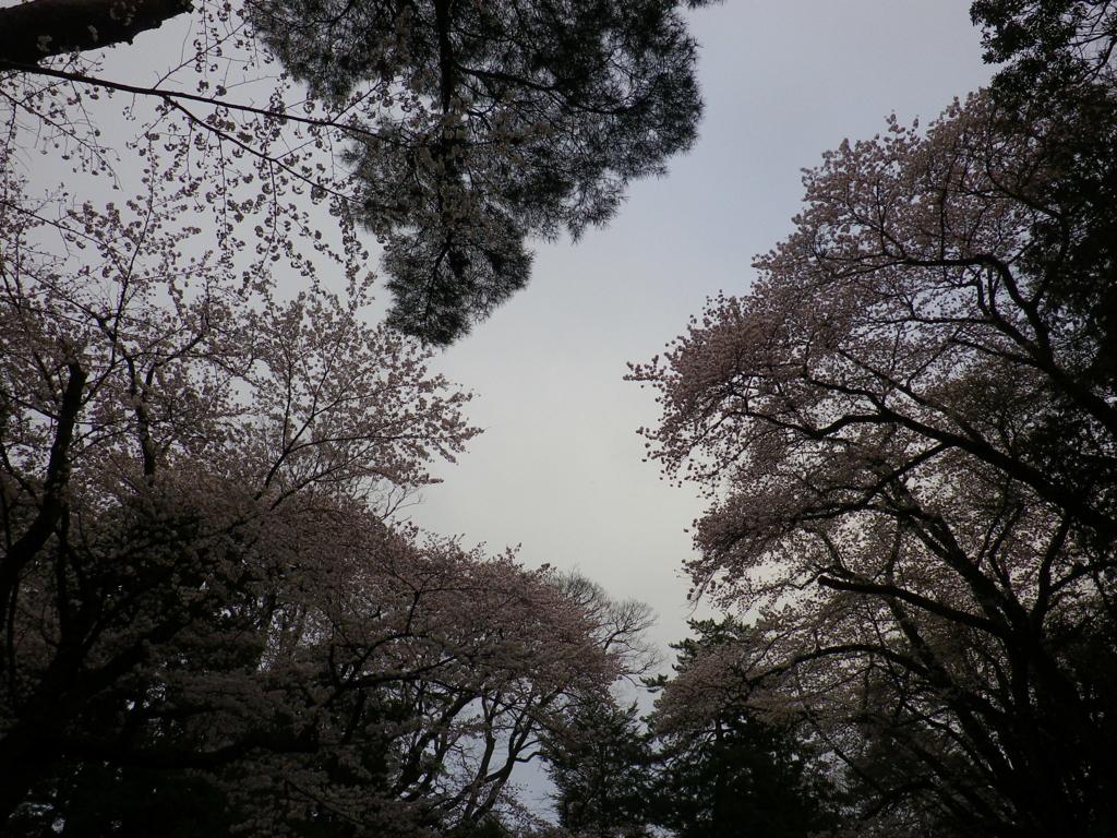 f:id:tetunekohosi:20170408231748j:plain
