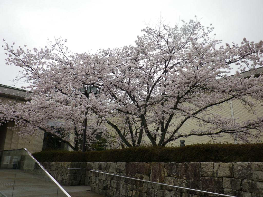 f:id:tetunekohosi:20170408231754j:plain