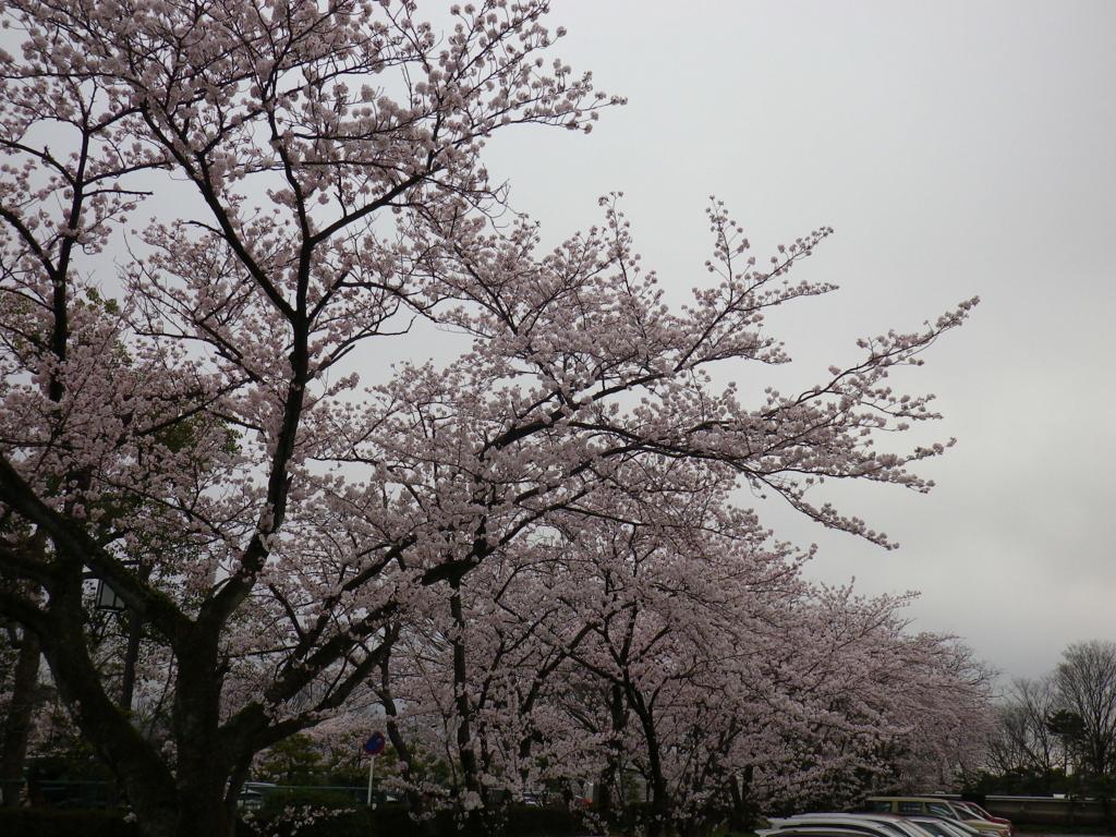 f:id:tetunekohosi:20170408231808j:plain