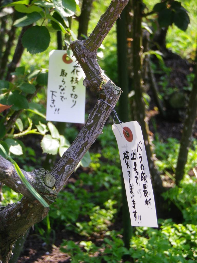 f:id:tetunekohosi:20170522173853j:plain