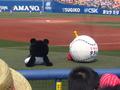 [野球][横浜]エキベーとブーブ