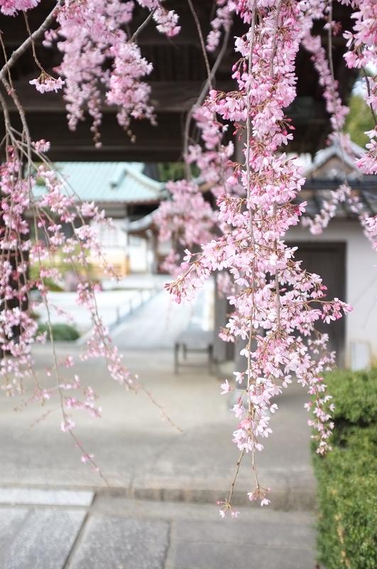 f:id:tfujimura:20110404110559j:image:h640